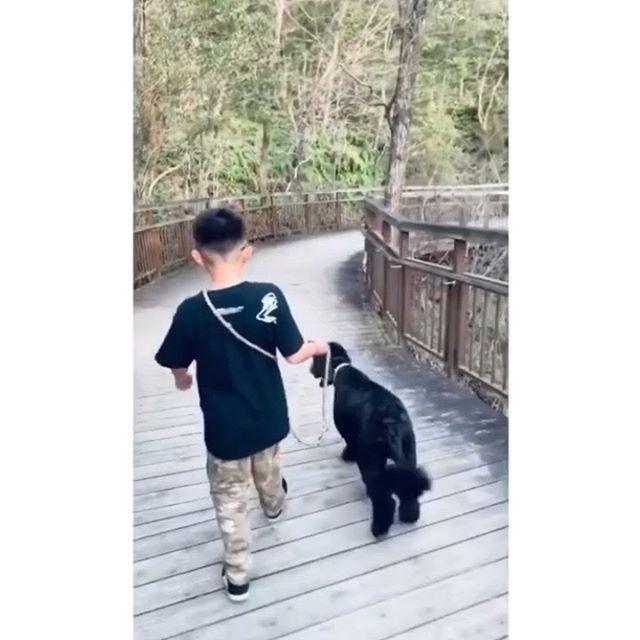 @scatchi ! いつもハッピーファミリーな投稿で楽しませてもらってます♫&いつもお兄ちゃんCOBOO T着てくれててありがとう♫🐕🦺素敵なお散歩動画だったのでリポストさせて頂きました♫弟くんもかわええね〜🕊#coboo #thankyoufromcoboo